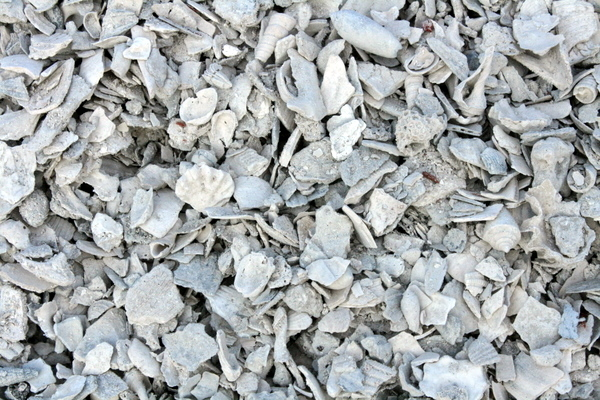 Crushed seashells available at gallo construction images for Crushed oyster shells for landscaping